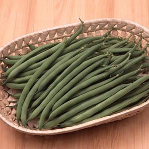 野菜の種/種子 サクサク王子ネオ つるなしいんげん 1dl(メール便可能)サカタのタネ|vg-harada