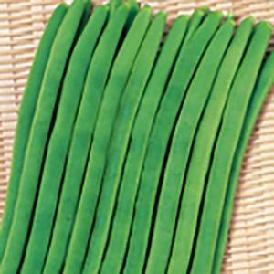 野菜の種/種子 プロップキング つるありいんげん 1dl(メール便可能)サカタのタネ|vg-harada
