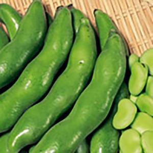 野菜の種/種子 駒栄 そら豆 1dl(メール便可能)サカタのタネ|vg-harada