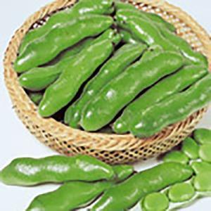 野菜の種/種子 打越一寸 そら豆 1L(大袋)サカタのタネ|vg-harada