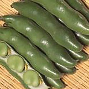 野菜の種/種子 打越緑一寸 そら豆 1dl(メール便可能)サカタのタネ|vg-harada