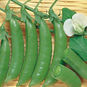 野菜の種/種子 スナック えんどう 2dl(大袋)サカタのタネ|vg-harada