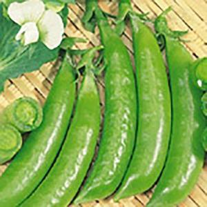 野菜の種/種子 スナック753 えんどう 1dl(メール便可能)サカタのタネ|vg-harada