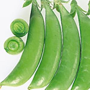 野菜の種/種子 ホルンスナック えんどう 1L(大袋)サカタのタネ|vg-harada