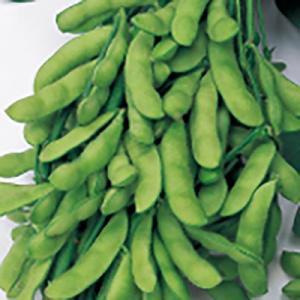 野菜の種/種子 いきなまる えだまめ 1dl(メール便可能)サカタのタネ|vg-harada