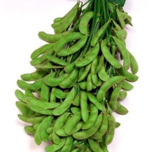 野菜の種/種子 おつな姫 えだまめ 1L(大袋)サカタのタネ|vg-harada