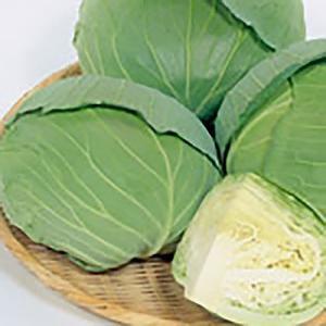 野菜の種/種子 新藍 キャベツ 0.8ml(メール便発送)サカタのタネ 種苗|vg-harada