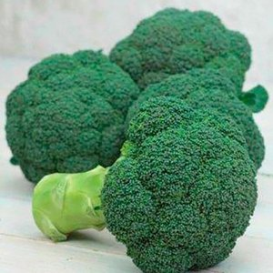 野菜の種/種子 グリーンキャノン ブロッコリー 0.7ml(メール便発送)サカタのタネ 種苗|vg-harada