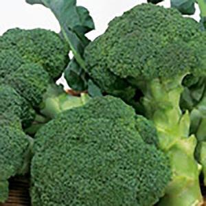 野菜の種/種子 ピクセル ブロッコリー 110粒(メール便発送)サカタのタネ 種苗|vg-harada