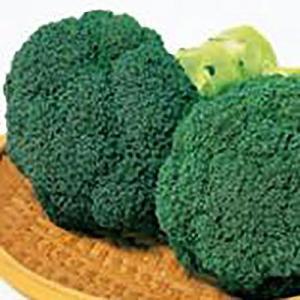 野菜の種/種子 緑帝 ブロッコリー 1ml(メール便発送)サカタのタネ 種苗|vg-harada