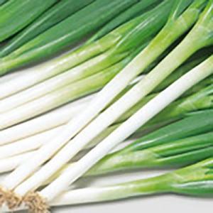 野菜の種/種子 春扇 ねぎ 2.5ml(メール便可能)サカタのタネ|vg-harada
