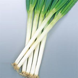 野菜の種/種子 夏扇2号 ねぎ 4ml(メール便可能)サカタのタネ|vg-harada