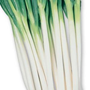 野菜の種/種子 石倉一本太 ねぎ 8ml(メール便可能)サカタのタネ|vg-harada