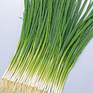 野菜の種/種子 緑秀 小ねぎ 15ml(メール便可能)サカタのタネ|vg-harada