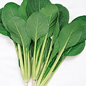 野菜の種/種子 なかまち コマツナ 10ml(メール便発送)サカタのタネ 種苗|vg-harada