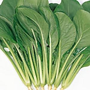 野菜の種/種子 わかみ コマツナ 10ml(メール便発送)サカタのタネ 種苗|vg-harada