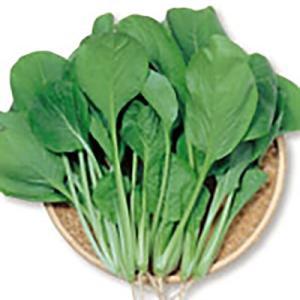 野菜の種/種子 みすぎ コマツナ 12ml(メール便発送)サカタのタネ 種苗|vg-harada