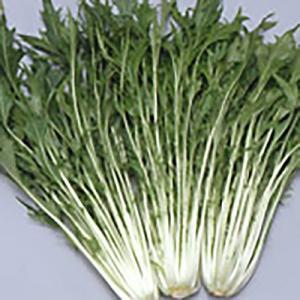 野菜の種/種子 水天 鍋物バッチリ 水菜 9ml (メール便可能)サカタのタネ|vg-harada
