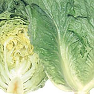 野菜の種/種子 リバーグリーン レタス 0.7ml(メール便発送)サカタのタネ 種苗|vg-harada