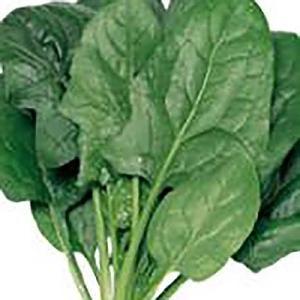 野菜の種/種子 ブライトン ほうれんそう 30ml(メール便発送)サカタのタネ 種苗|vg-harada