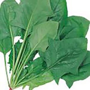 野菜の種/種子 アクティブ ほうれんそう 30ml(メール便発送)サカタのタネ 種苗|vg-harada
