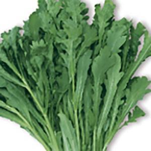 野菜の種/種子 きくまろ サラダ春菊 シュンギク 40ml(メール便可能)サカタのタネ|vg-harada