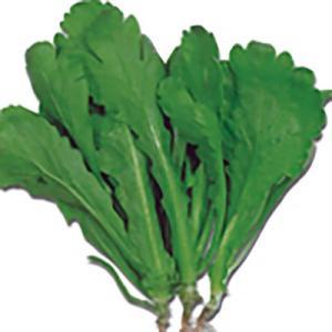 野菜の種/種子 大葉春菊 シュンギク 30ml(メール便可能)タキイ種苗|vg-harada