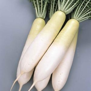 野菜の種/種子 冬みね2号 大根 5.0ml(メール便発送)サカタのタネ 種苗|vg-harada