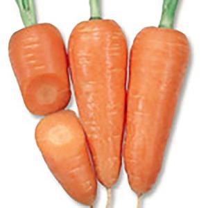 野菜の種/種子 金港四寸 ニンジン 6ml(メール便可能)タキイ種苗|vg-harada