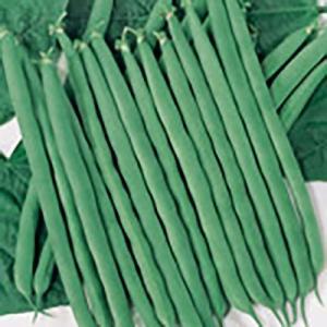野菜の種/種子 ミニドカ つるありいんげん 26ml(メール便可能)サカタのタネ|vg-harada