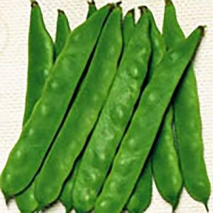 野菜の種/種子 ジャンビーノ つるありいんげん 26ml(メール便可能)サカタのタネ|vg-harada