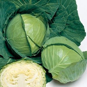 野菜の種/種子 秋徳SP キャベツ 200粒(メール便可能)タキイ種苗|vg-harada