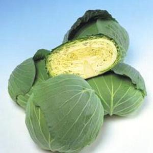 野菜の種/種子 彩里 キャベツ 2000粒(メール便発送)タキイ種苗|vg-harada