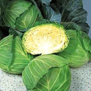 野菜の種/種子 彩音 キャベツ 2000粒(メール便発送)タキイ種苗|vg-harada