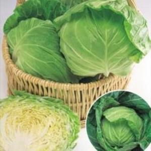 野菜の種/種子 春波 キャベツ 2000粒(メール便可能)タキイ種苗|vg-harada
