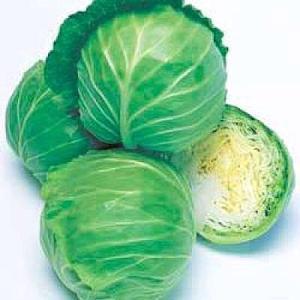 野菜の種/種子 レンヌ キャベツ 2000粒(メール便発送)タキイ種苗|vg-harada