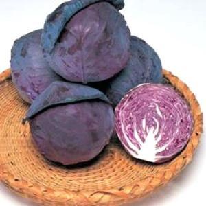 野菜の種/種子 ネオルビー・レッドキャベツ 2000粒(メール便発送)タキイ種苗|vg-harada