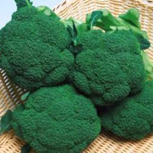 野菜の種/種子 メガドーム・ブロッコリー 20ml(メール便可能)タキイ種苗|vg-harada