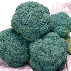 野菜の種/種子 トップギア・ブロッコリー 1.3ml(メール便可能)タキイ種苗|vg-harada