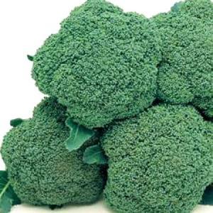野菜の種/種子 ハイツSP・ブロッコリー 2000粒(大袋)タキイ種苗|vg-harada