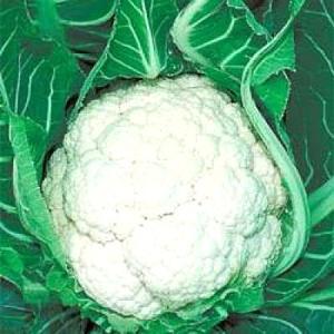 野菜の種/種子 スノーニューダイヤ・カリフラワー 20ml(メール便可能)タキイ種苗|vg-harada
