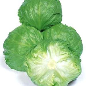 野菜の種/種子 バークレー・レタス 0.6ml(メール便可能)タキイ種苗|vg-harada