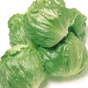 野菜の種/種子 シスコ・レタス 20ml(メール便発送)タキイ種苗|vg-harada