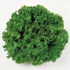 野菜の種/種子 グリーンウエーブ・リーフレタス 20ml(メール便可能)タキイ種苗|vg-harada
