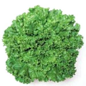 野菜の種/種子 グリーンジャケット・リーフレタス 120粒(メール便可能)タキイ種苗