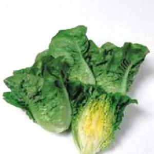 野菜の種/種子 マノア・ミニレタス 20ml(メール便発送)タキイ種苗|vg-harada