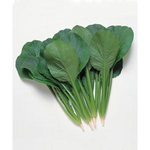 野菜の種/種子 極楽天・コマツナ 小松菜 こまつ菜 20ml(メール便可能)タキイ種苗|vg-harada