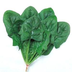 野菜の種/種子 オーライ・ほうれんそう ほうれん草 法蓮草 1dl (メール便可能)タキイ種苗|vg-harada