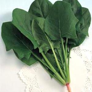 野菜の種/種子 エリナ・ほうれんそう ほうれん草 法蓮草 1L (大袋)タキイ種苗|vg-harada
