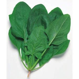 野菜の種/種子 おてもやん・ほうれんそう ほうれん草 法蓮草 1L (大袋)タキイ種苗 vg-harada